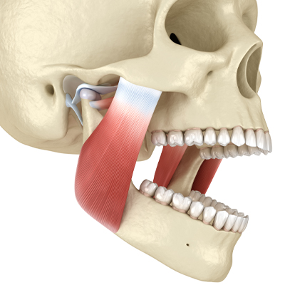 illustration of jaw joint